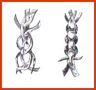 Trenza de cuatro con tiento ojalado observe la figura y compruebe cómo van dispuestos los tientos que al ajustarlos formarán parte de la trenza ya